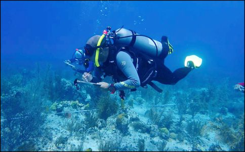 BUCEO.CORALES04